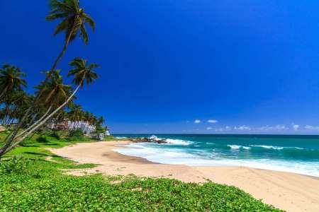 Sri Lanka 8-Day Beach & Safari Trip: Visit Tangalle, Mirissa, Yala National Park