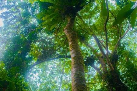 Sinharaja Rain Forest