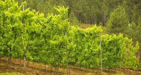 Região do Vinho Verde