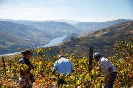 From Porto: Full-Day Douro Valley 4X4 Tour