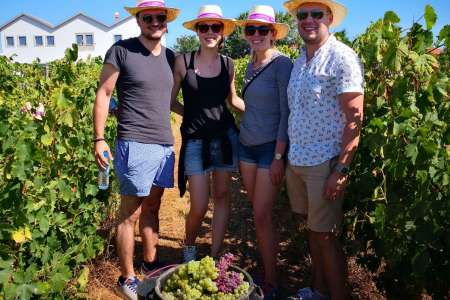 Douro Valley: Grape Harvest Tour With Grape Stomping And Wine Tasting