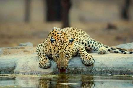 Jaipur Half-Day Safari Of Jhalana Leopard