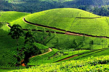 Gods Own Place-Kerala Tour