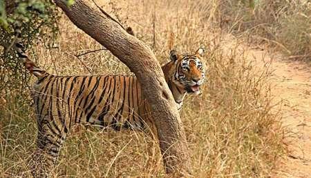 7-Tägige Reise In Das Goldene Dreieck Von Indien Mit Ranthambore National Park
