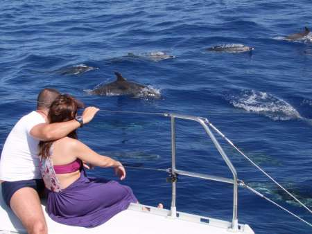 Madeira Island Jeep Tour To The Valleys & Skywalk With Dolphin Watching