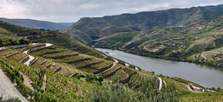 Douro Valley Private Tour With Port Wine Tasting