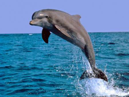 Dolphin Watching Boat Tour And Visit 4 Islands Of Ria Formosa From Faro