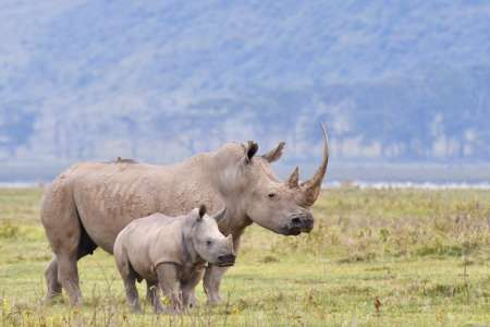4 Days Safari To Lake Nakuru & Maasai Mara