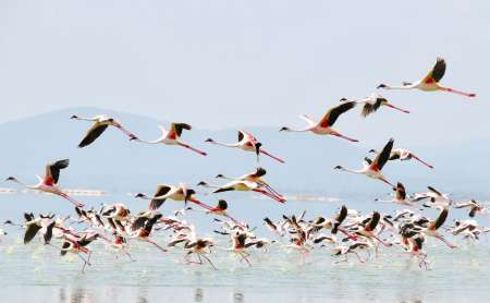 Safari De 5 Jours Au Kenya Au Lac Nakuru, Au Lac Naivasha Et Au Masai Mara
