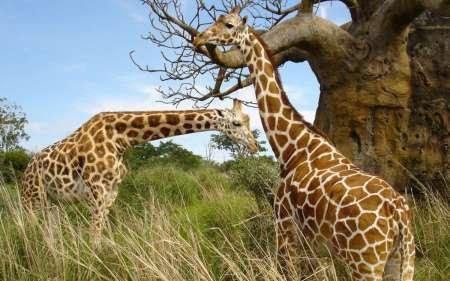 Safari De 2 Días En Tanzania: Visite Ngorongoro Y Manyara