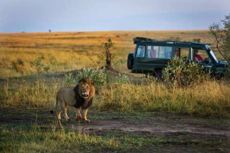 Maasai Mara 3-Day Luxury Safari: Visit The Most Famous National Park Of Kenya