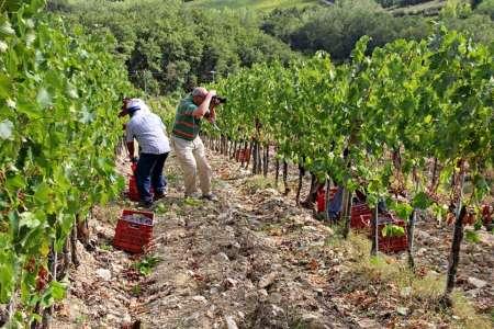 Exklusive Wein- Und Kulturreise Ab Siena