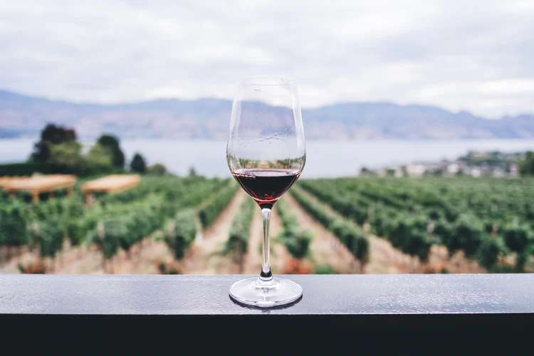 Portugal é o lar de diversas marcas de vinho, tantas opções que chegam a causar confusão