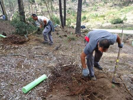 Guardiões Verdes Da Floresta: Ajude A Restituir As Florestas Nativas De Sintra