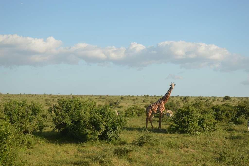 Revenir à Kenya