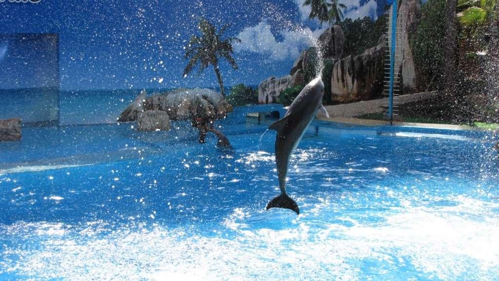 Golfinhos, aves de rapina, escorregas relaxantes, jacuzzi e ainda algumas atrações que desafiam os mais corajosos. Há de tudo no Zoomarine!