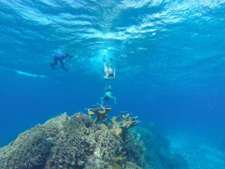 Cozumel Snorkel Experience