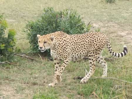 3-Day Trip To Maasai Mara Starting From Nairobi
