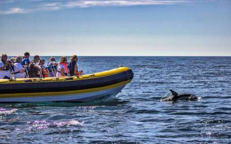 Dolphin Discovery: 2-Hour Boat Tour To Watch Dolphins In Portimão