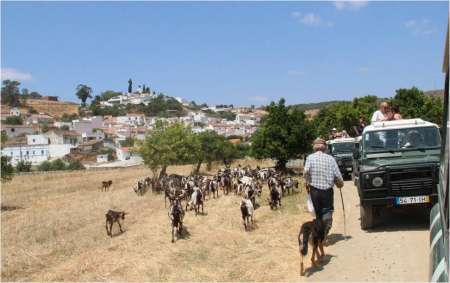 Half-Day Nature Jeep Safari In The Guadiana Region
