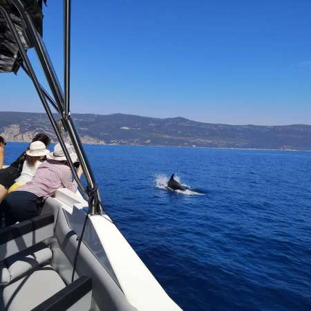 From Lisbon: 2-Hours Dolphin Watching Boat Tour In Sado Bay