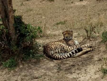 Nairobi: 4-Day Trip To Maasai Mara And Lake Nakuru