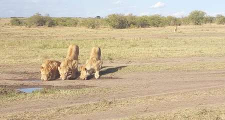Masai Mara 3-Day Guided Safari Trip