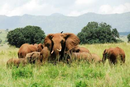 The Ultimate Uganda Safari: 18-Day Trip