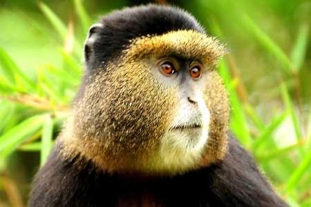 6-Day Gorilla And Golden Monkey Trekking In Mgahinga National Park