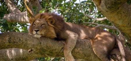 13 Days Trip Essential Uganda: Murchison Falls, Queen Elizabeth, Kibale, Bwindi & Lake Mburo