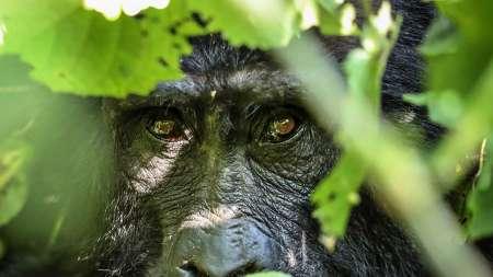 4 Days Bwindi Impenetrable National Park Private Safari Tour