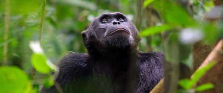 8 Days Private Tour In Uganda's Forests
