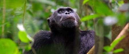 Tour Privado De 8 Días En Los Bosques De Uganda