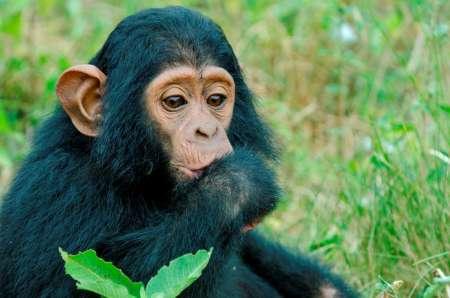 6-Day Private Uganda Trip: Visit Lake Mburo National Park