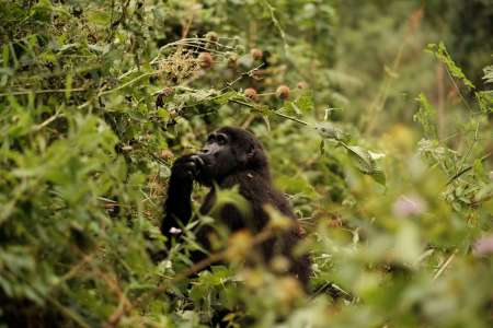 Parque Nacional Impenetrável de Bwindi