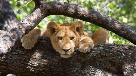 3-Day Uganda Safari Tour In The Queen Elizabeth National Park