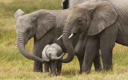 9-Day Uganda Safari Trip