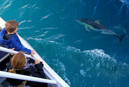 Phillip Island Dolphin And Whale Watching Cruise