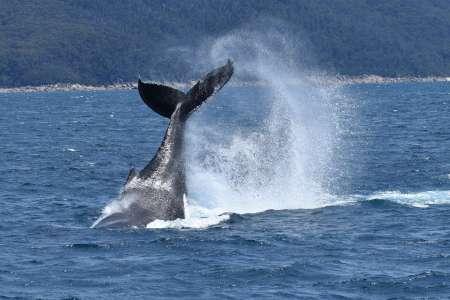 Croisière D'Observation Des Baleines Sur Le Promontoire Wilsons