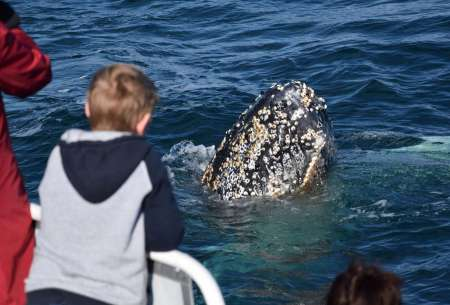 Winter Whale Watching Cruise In Phillip Island
