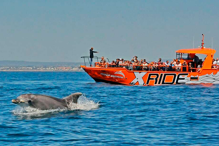 Dolphin watching boat tour in the Algarve coast
